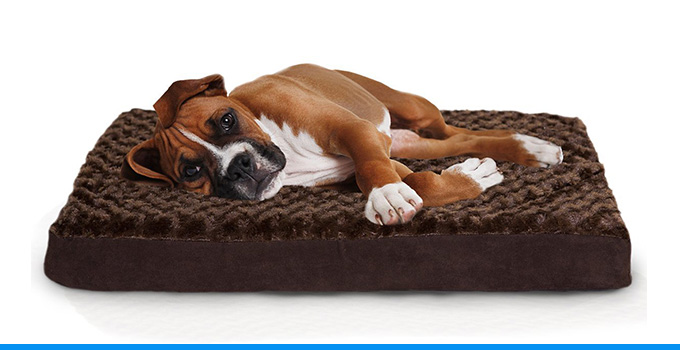 Top 10 Most Comfortable And Best Dog Beds 2019 Top Ten