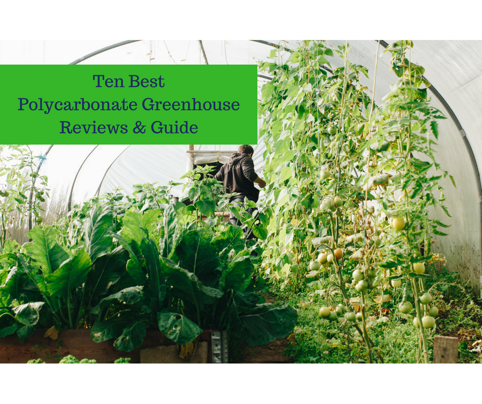 Ten Best Polycarbonate Greenhouse Reviews & 2019 Guide - Top